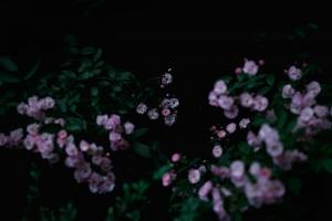 Moody pink flowers
