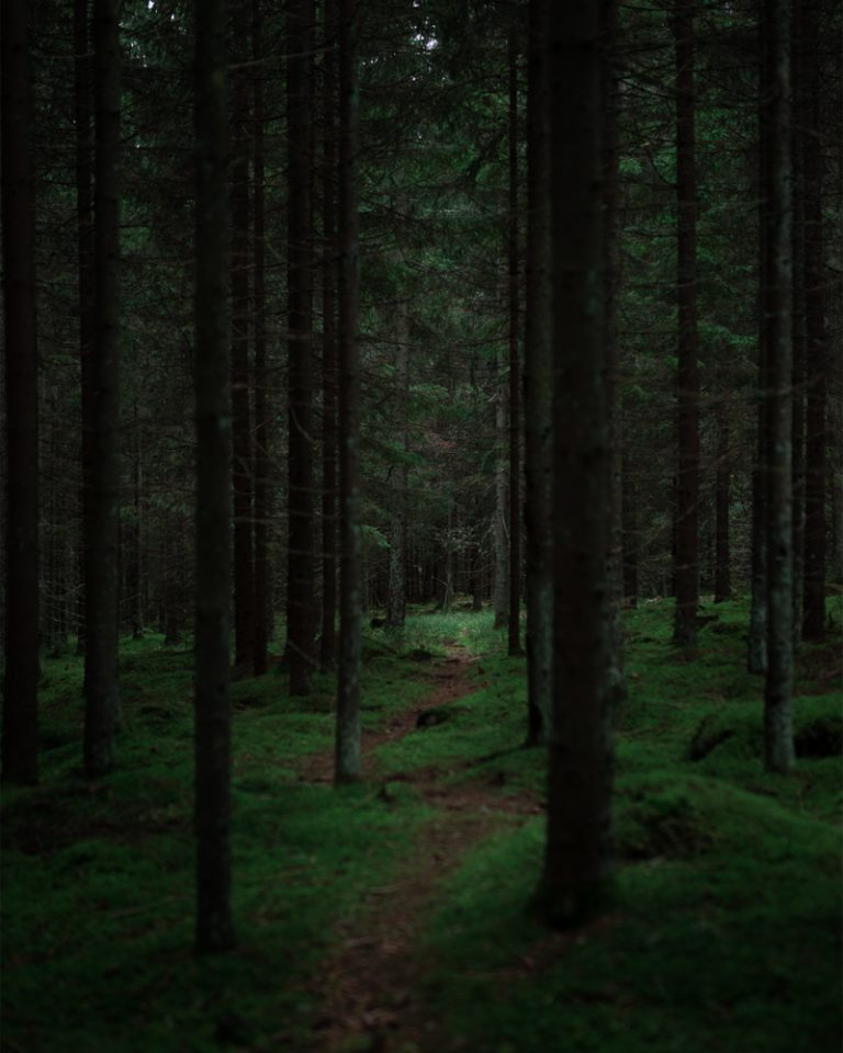 A moody Finnish forest
